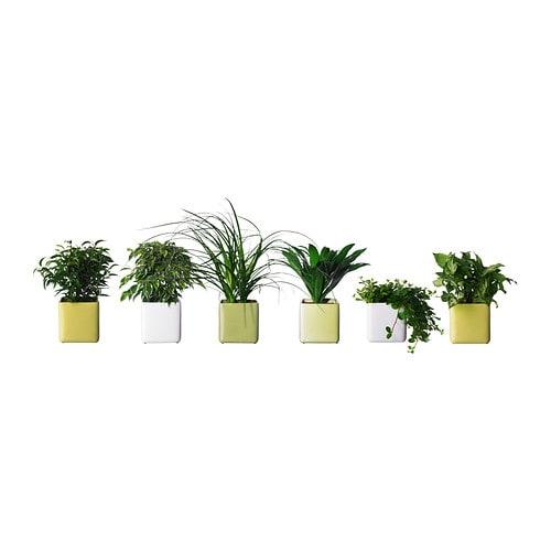 Stollig planta con maceta ikea - Plantas de plastico ikea ...