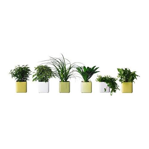 stollig planta con maceta ikea. Black Bedroom Furniture Sets. Home Design Ideas