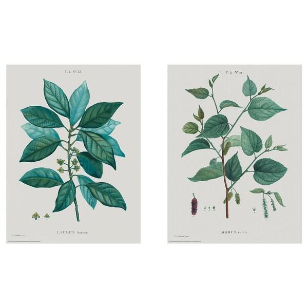 BILD irudia botanika-ikerketak I
