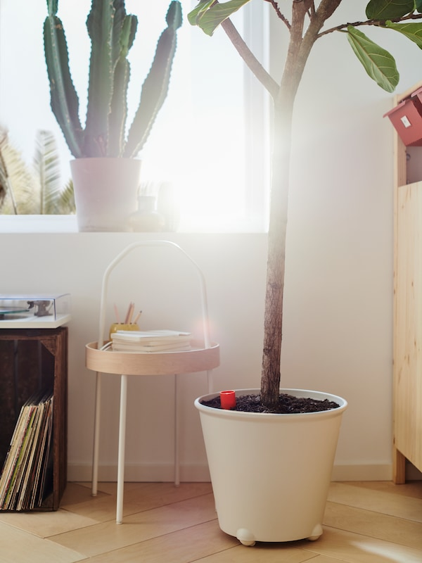 A cactus plant on a windowsill, a tree in an IKEA PS FEJÖ self-watering plant pot, and a white BURVIK side table with books.