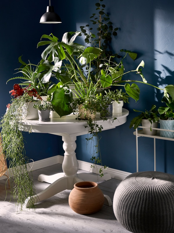Small, round table with a single, turned leg, standing in a corner, its top completely covered with plants in pots.