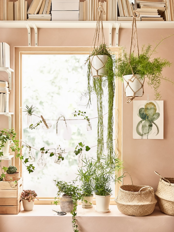 Window sill with several pots with plants on top and FLADIS baskets. On the ceiling are two pots with hanging plants and a painting on the wall in shades of light pink.