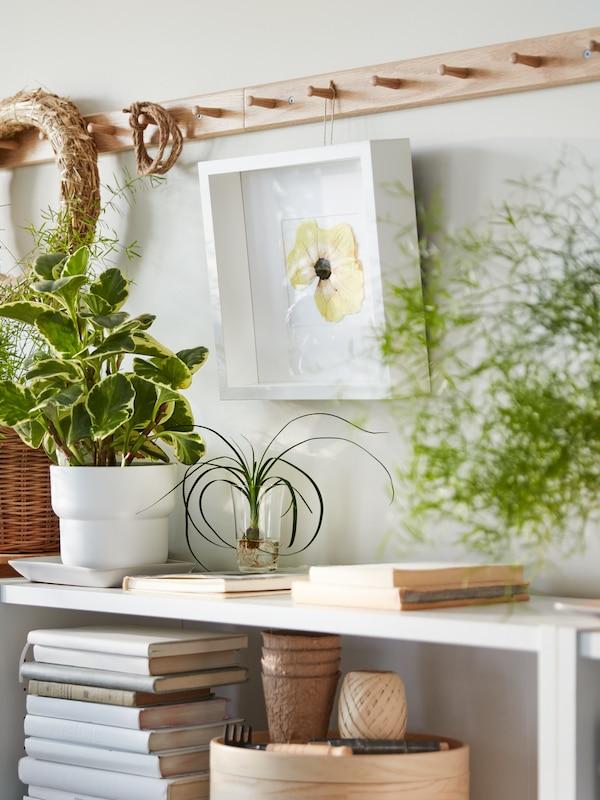Egy fehér BILLY könyvespolcot látunk, a polcain pedig különböző növényeket. Felette egymás mellé szerelt tölgy HÖVOLM fogasok vannak, amelyről egy fehér SANNAHED képkeret lóg le.