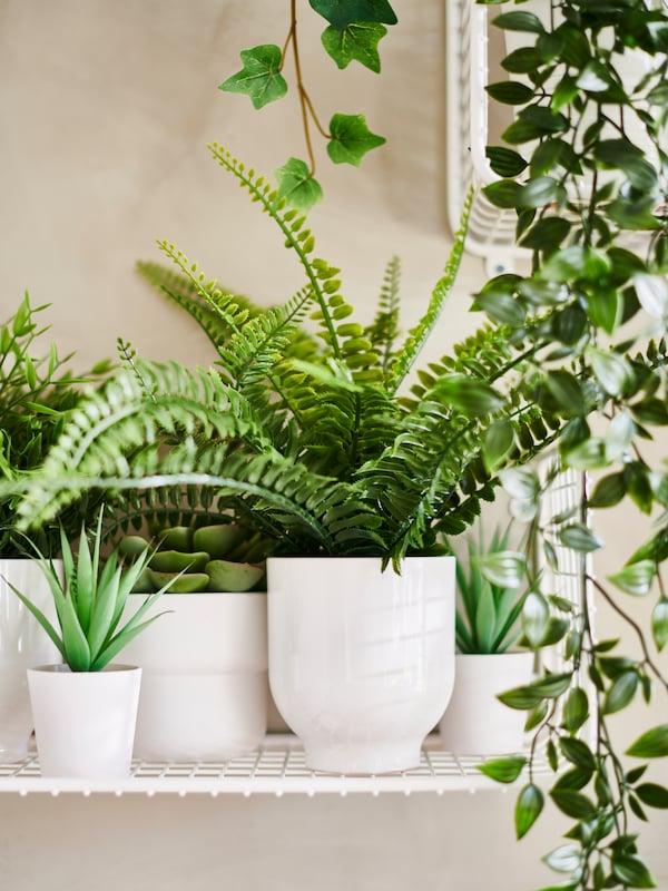 Vita krukor i grupp med gröna växter inuti