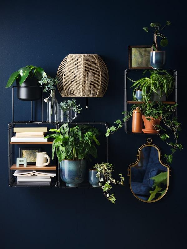 une composition sur un mur bleu foncé avec des plantes, des étagères, un miroir