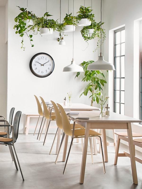 Ряд столов со стульями в ярком свете от больших окон, белые светильники и растения под потолком.