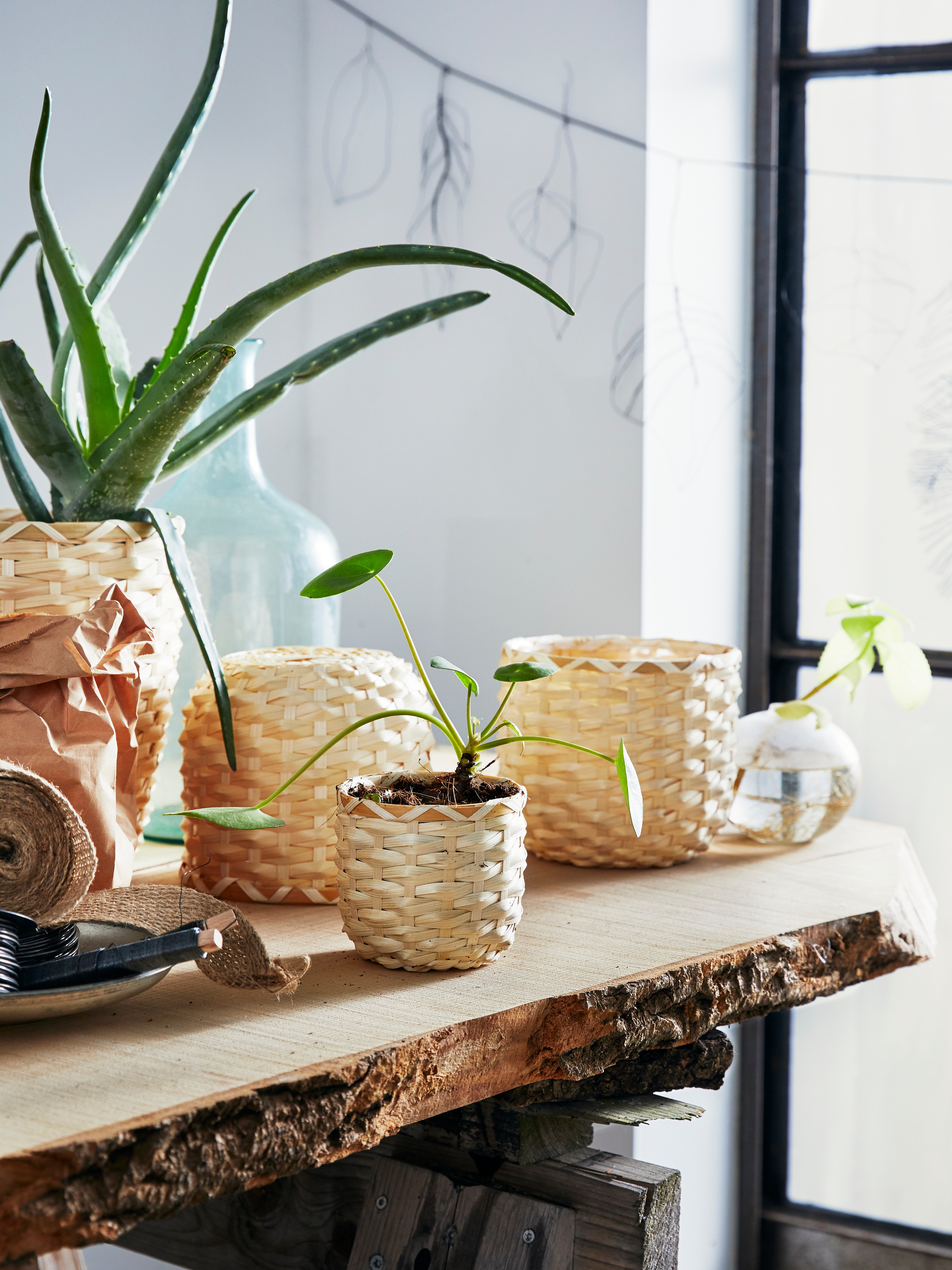 Handmade round KAFFEBÖNA bamboo plant pots with green plants on a wooden table, in front of a sunny window.