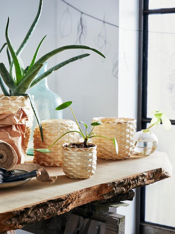 Des pots de plantes, fabriqués à partir de fibres naturelles tissées, sont posés sur une étagère en mauvais état. Les fleurs se tendent vers le soleil qui entre par une fenêtre voisine.