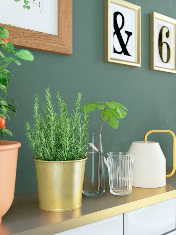 Una mensola color ottone su cui poggiano un annaffiatoio, piante ed erbe aromatiche in vaso e una talea in un vaso di vetro.