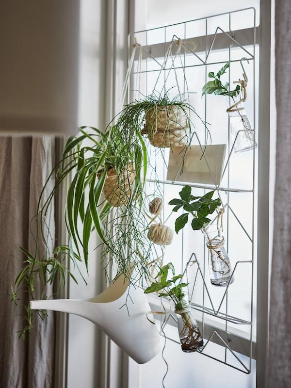 Ein Fenster mit einer weissen KVICKSUND Notiztafel, von der Pflanzen in Töpfen und Glasvasen herabhängen.