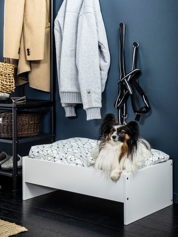 Small brown, white and black dog sitting on raised LURVIG dog bed in hallway