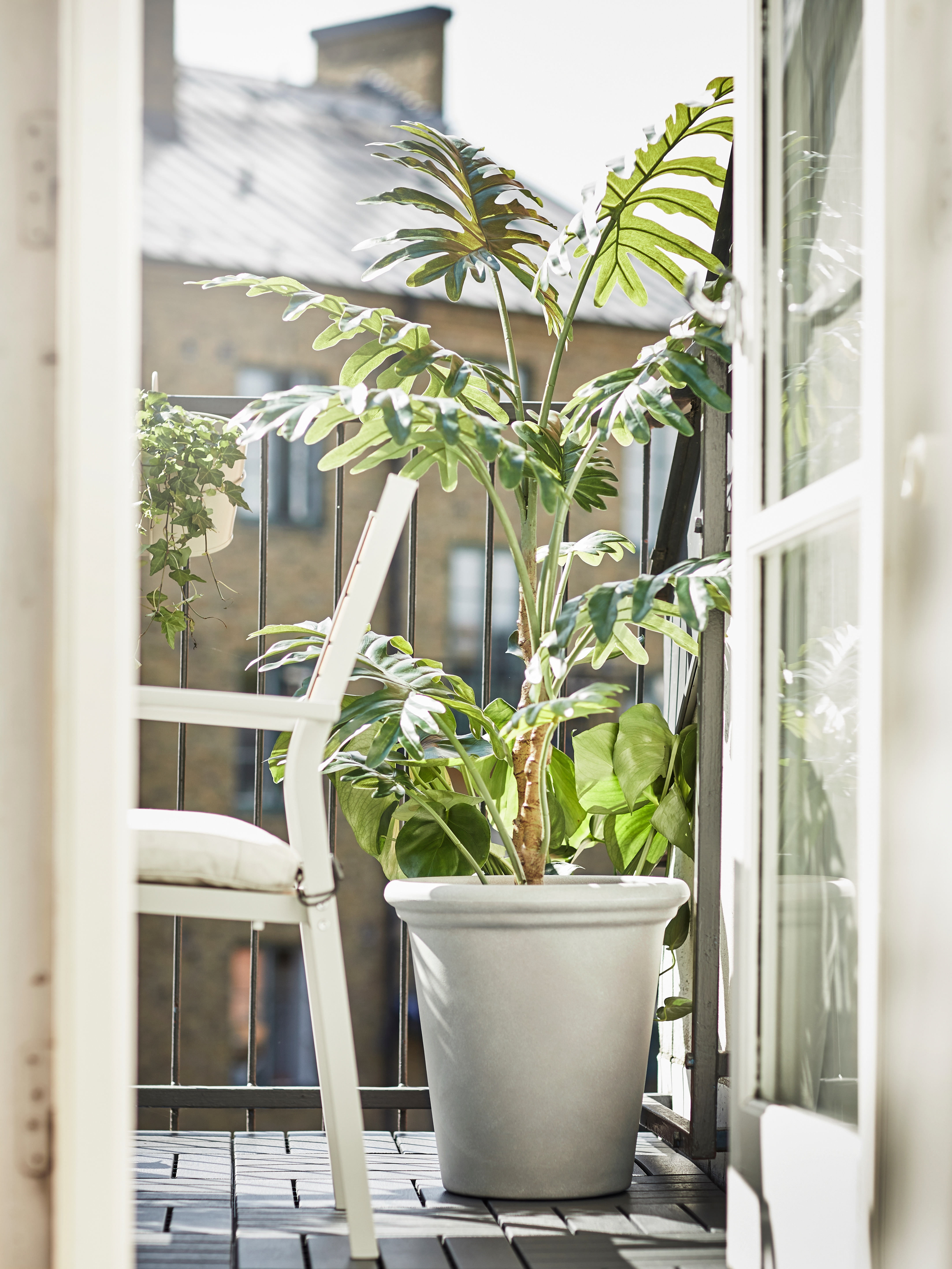 Sun lit balcony with a CHILIPEPPAR plant pot containing a tall plant, next to a white chair.