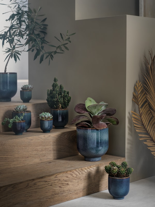 De blåa krukorna DRÖMSK i olika storlekar står i en liten trappa av trä med olika typer av kaktusar planterade i.