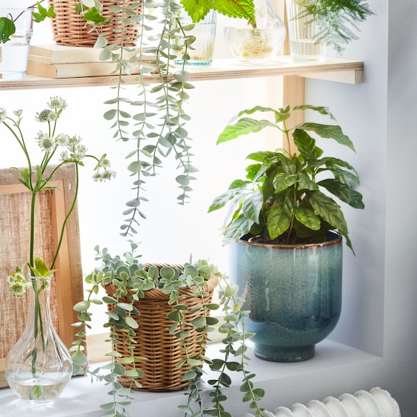 DROMSK plant pot sat on a bright shelf with real and artifical plants