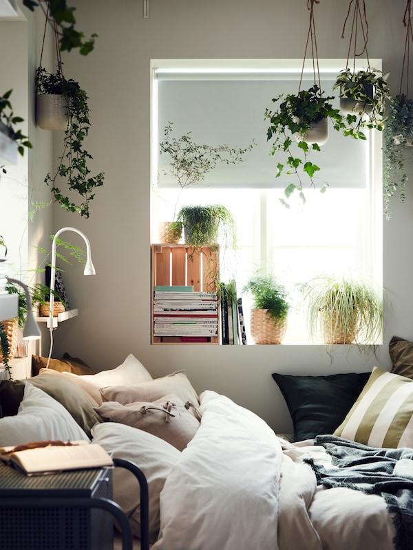 Un lit rempli de coussins et plusieurs plantes vertes suspendues.