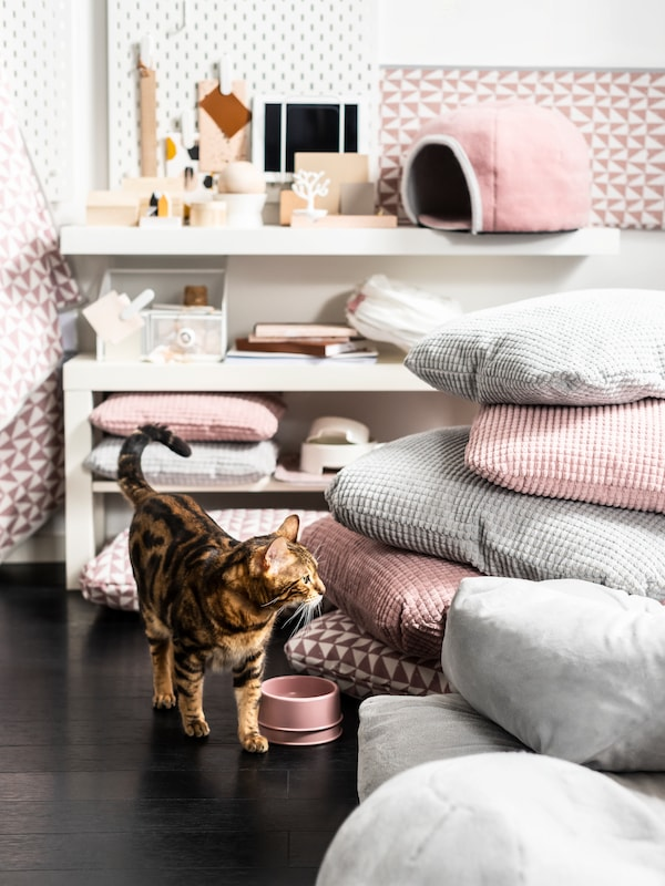 A brown, black and white cat is standing next to a pink LURVIG bowl in a room with lots of pink and grey cushions.