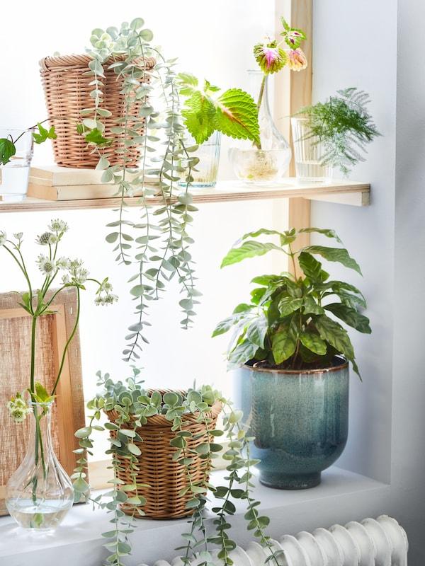 FEJKA artifical potted plants and KAKTUSFIKON plant pot as a decoration.