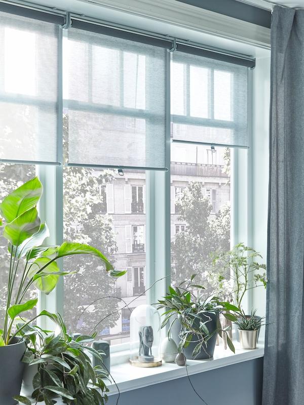 O fereastră cu trei storuri gri care lasă să intre un pic de lumină, plante în ghivece și obiecte decorative sunt așezate pe pervaz.