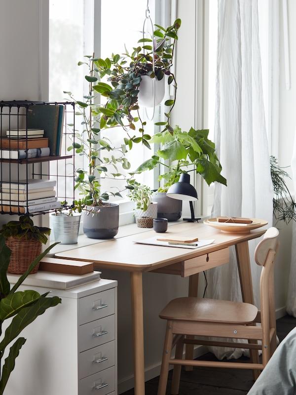 مكتبLISABO من خشب الدردار وكرسي من خشب البتولا RÖNNINGEبجانب نافذة. ونباتات على رف النافذة، ووحدة أدراج HELMER بيضاء بالجوار.