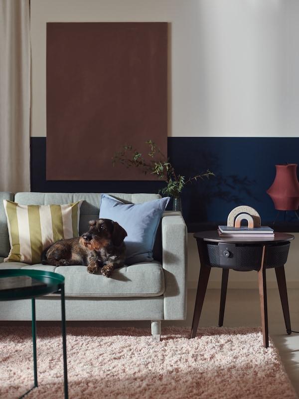 Egy kiskutya pihen egy LANDSKRONA kanapén. A kanapé mellett egy STARKVIND asztal áll légtisztítóval.