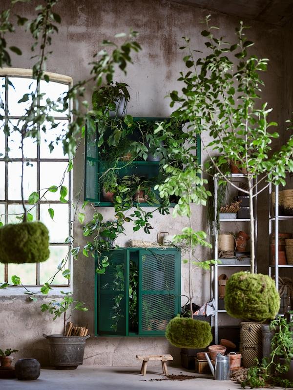 Dva zelena IVAR ormarića s vratima su pričvršćeni za zid pored dve HYLLIS spojene police, u sobi punoj biljaka.