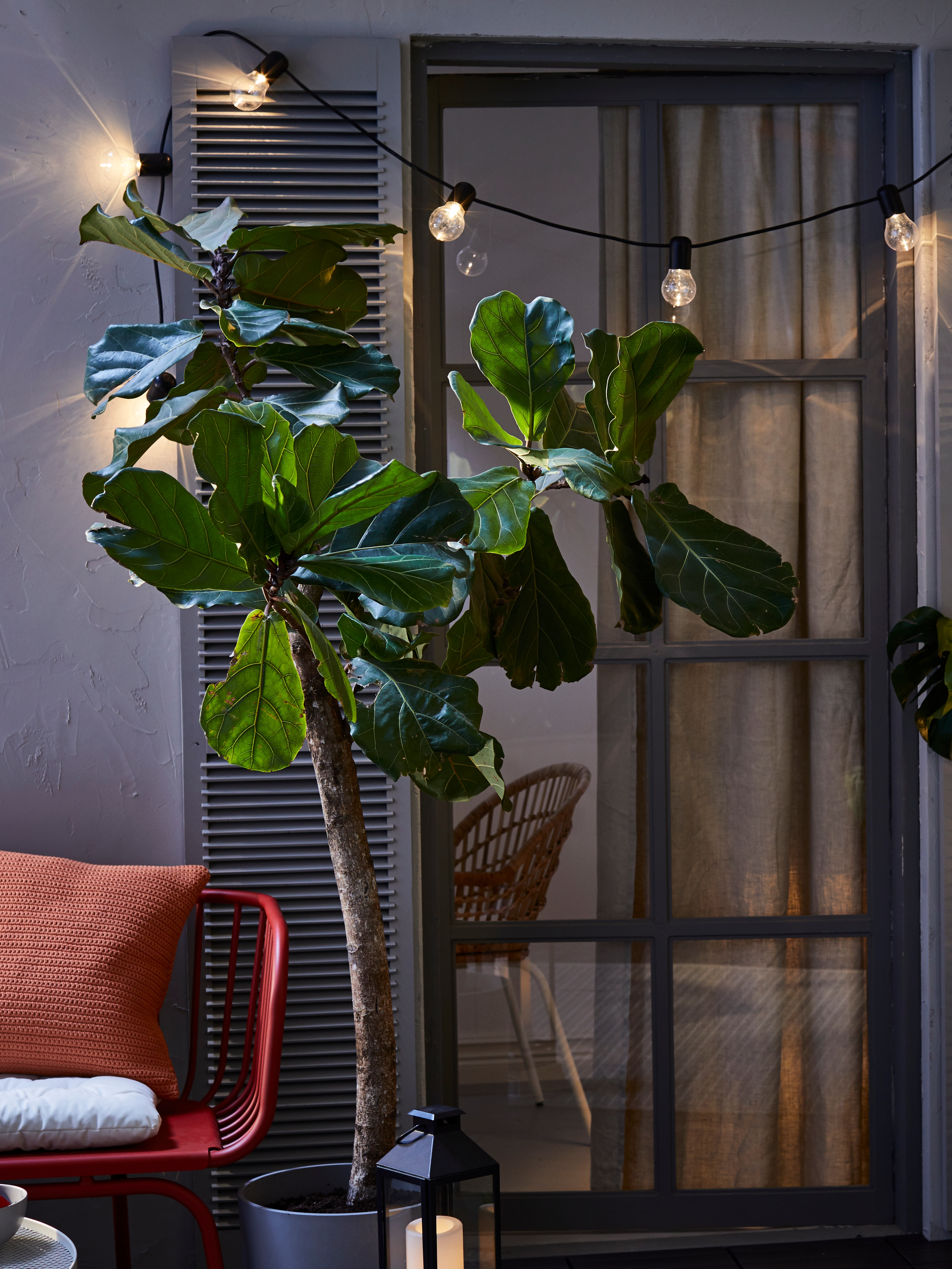 Night-time exterior of balcony door with shutters, various plants, lighting chain and LED lamp.