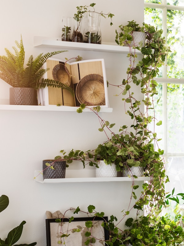 Potted green plants trail down from three, white, MALMBÄCK display shelves mounted on a white wall next to a window.