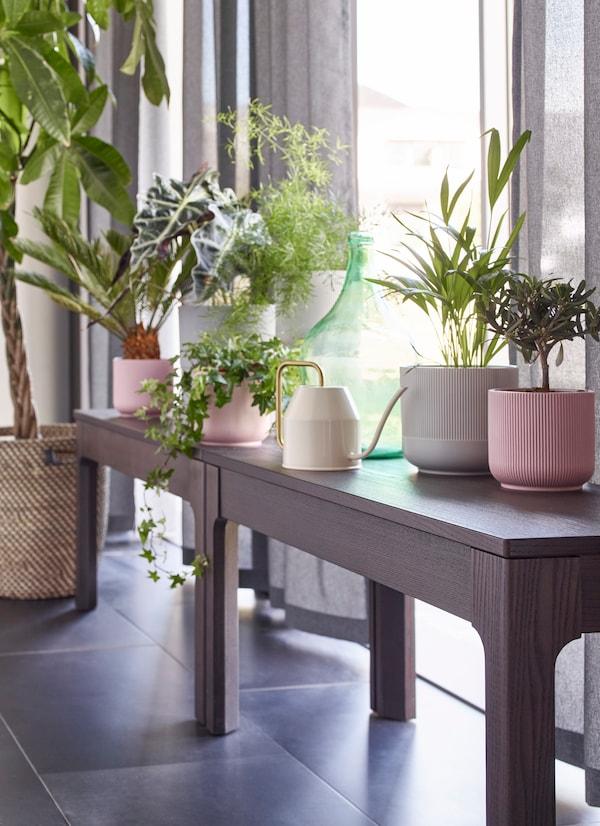 Pitkä penkki ikkunan edessä, jossa on erikokoisia kasveja ja pieniikastelukannu.