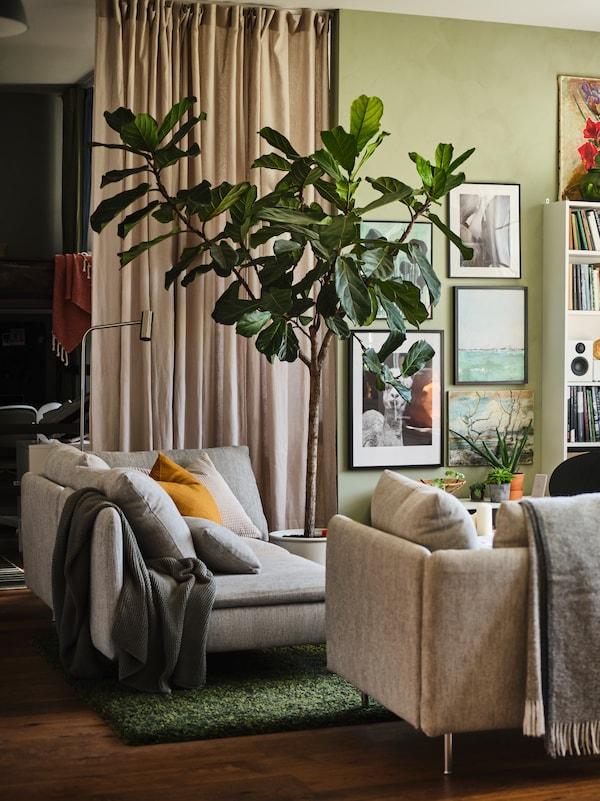 Ett ljusgrönt vardagsrum där en ljus soffa och en grå soffa står brevid varandra på en grön matta. I mitten av rummet står en stor fikusväxt som sträker sig upp mot taket.