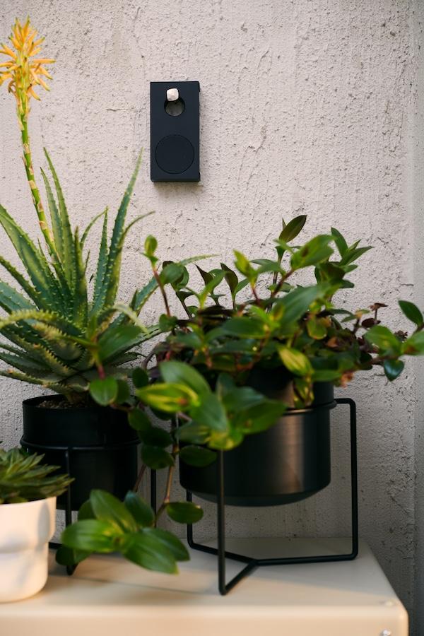 GOJIBÄR Blumentopf in schwarz