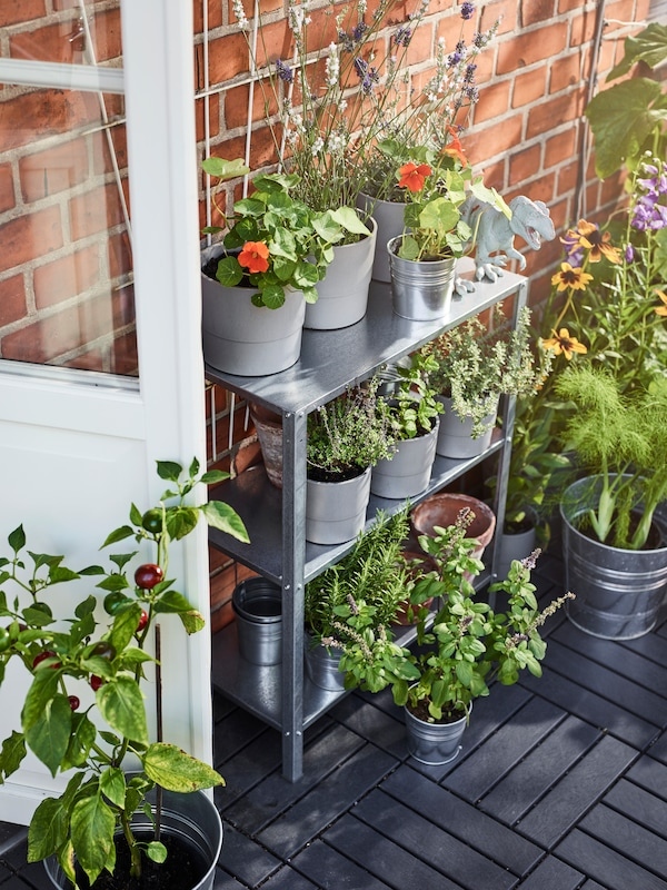 Metal shelving with various potted plants, along with other potted plants on the floor beside it, by a brick wall.