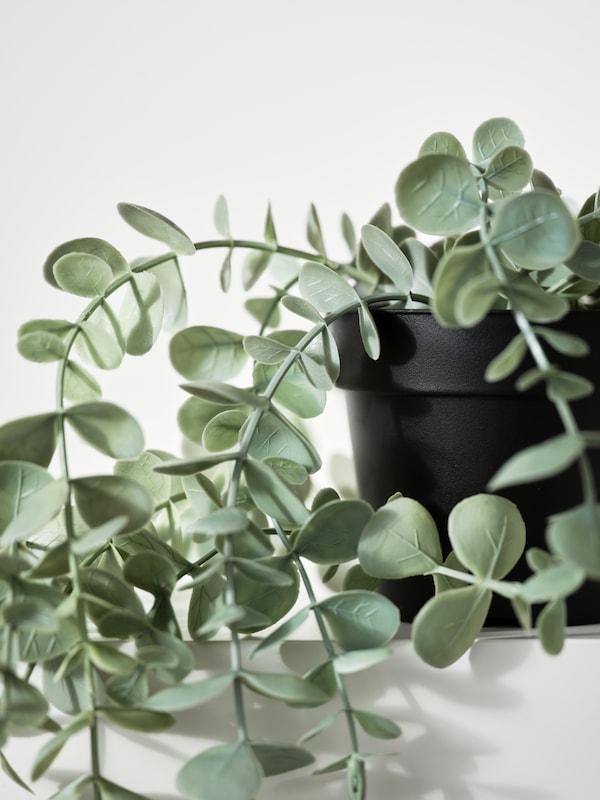 ต้นยูคาลิปตัสประดิษฐ์แบบแขวน FEJKA/เฟคก้า ในกระถางสีดำบนชั้นวางสีขาว ใบห้อยย้อยลงมาตรงขอบ