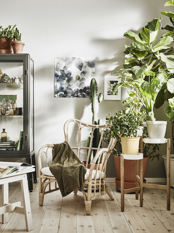 Bright living room setting with large amounts of plants. Bamboo armchair in the center with green blanket over arm