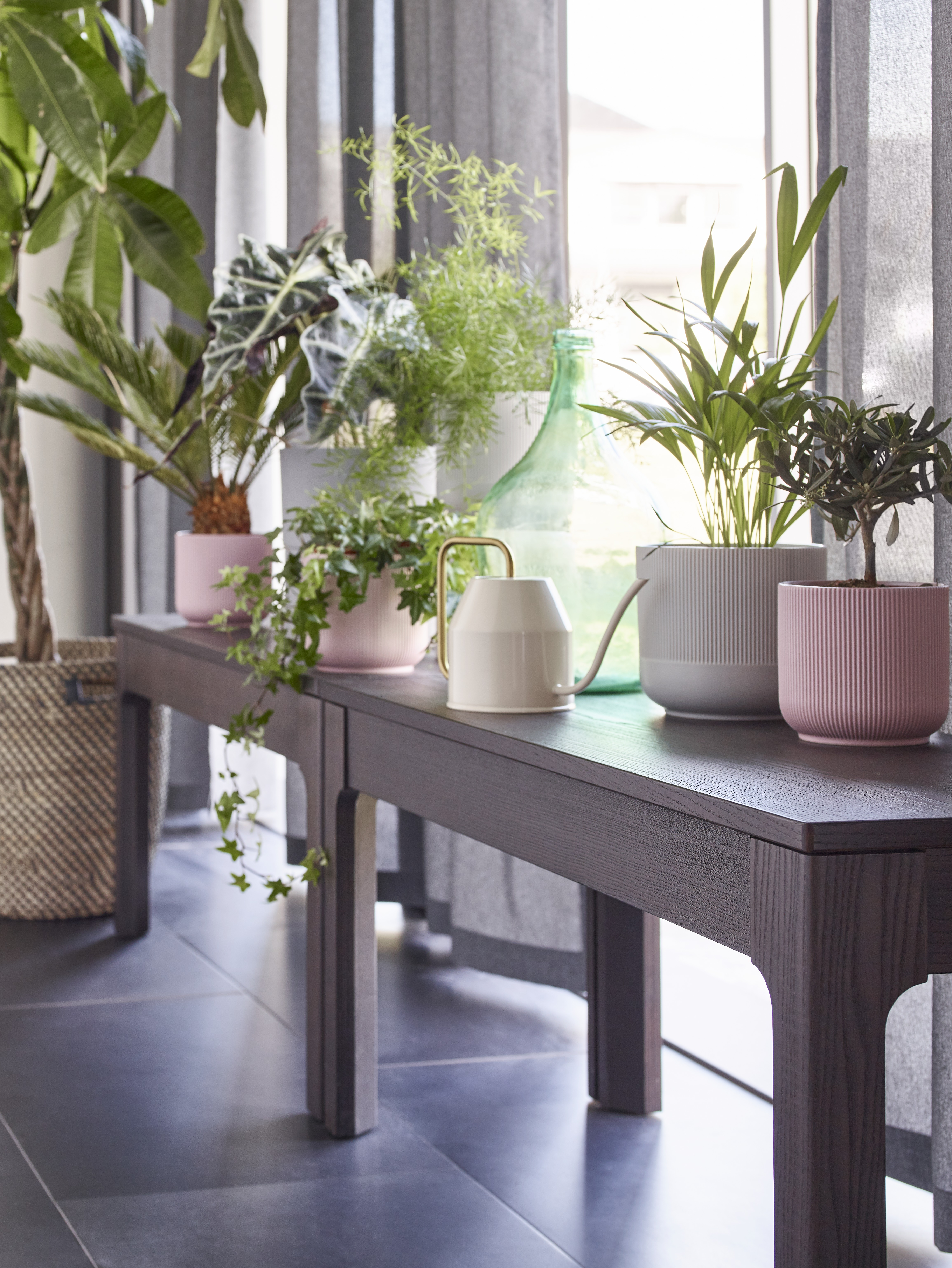 Two dark brown EKEDALEN benches are side-by-side on a tiled floor, holding various potted plants by a big window.