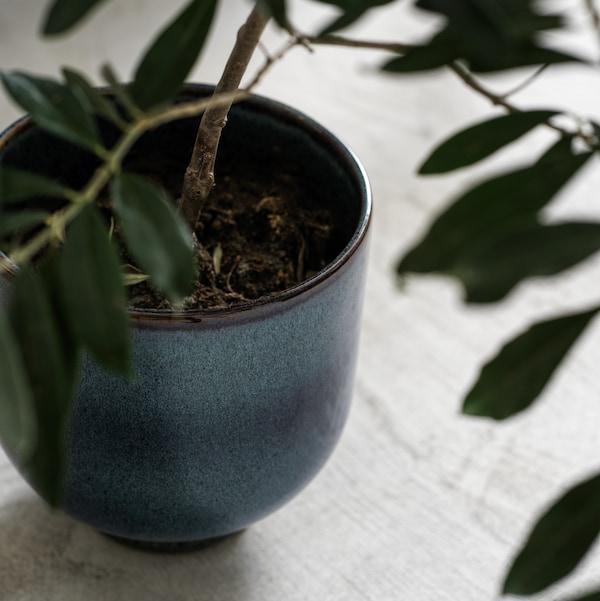 Tummansininen DRÖMSK in/outdoor-ruukku, josta kasvaa kasvi, seisoo lattialla kirkkaalla, aurinkoisella alueella.