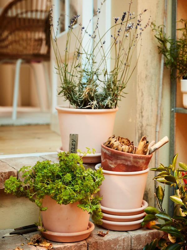 Terracotta plant pots with herbs, a lavender plant and stacked terracotta saucers.