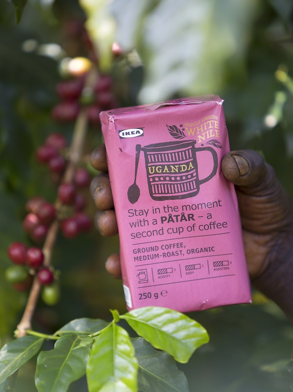 A person's hand holding a pink packet of IKEA PÅTÅR White Nile coffee among the coffee bean plants.