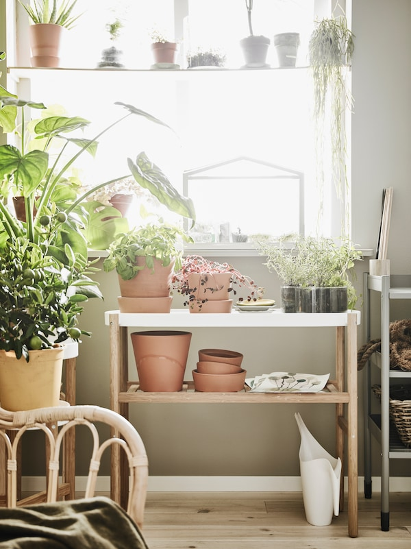 Close up of bamboo plant stand against window.