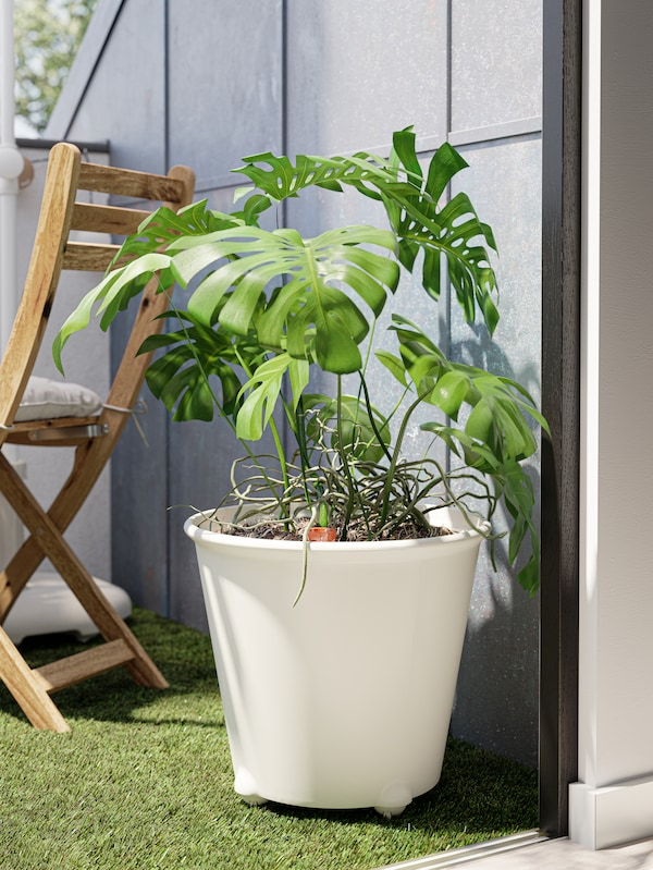 A Monstera plant inside a large white self-watering plant pot with castors, artificial grass decking and a foldable chair.