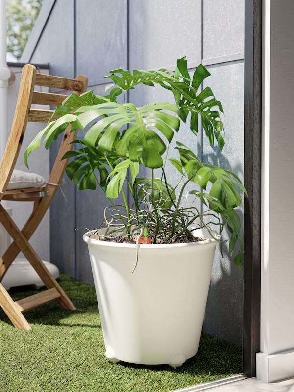 Pianta MONSTERA in un grande vaso bianco a riserva d'acqua con rotelle, pedana da esterno/prato artificiale e sedia pieghevole.