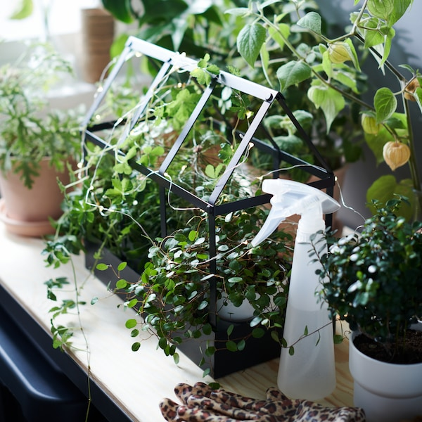 A small metal greenhouse overflowing with plants in small pots.