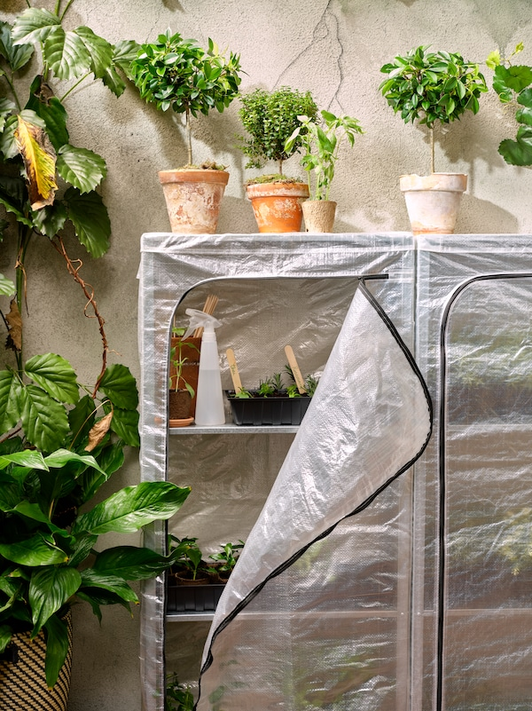 Plant pots with plants on a covered storage unit holding various potted plants and gardening items, by a large plant.