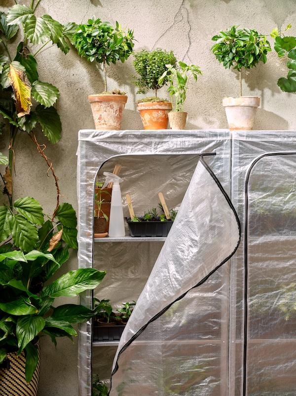Cache-pots avec plantes sur un rangement couvert contenant diverses plantes en pots et des articles de jardinage, à côté d'une grande plante.