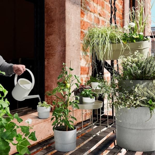 Viele verschiedene Pflanzen und Töpfe von IKEA