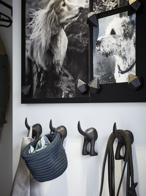 A black noticeboard with photos of two dogs, four dog-shaped hooks with towel, a blue basket and black leashes hanging.