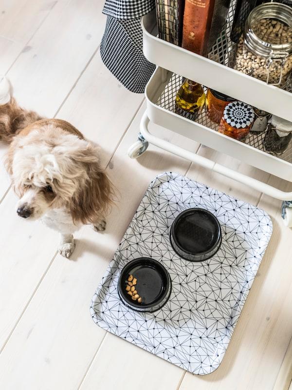 Un cane di piccola taglia accanto a un vassoio LURVIG con motivo bianco e nero con sopra due ciotole LURVIG accanto a un carrello RÅSKOG - IKEA