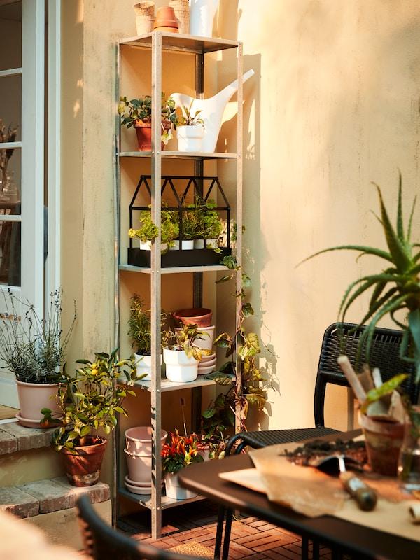 Ein hohes Metallregal mit Topfpflanzen, Kräutern, einer Giesskanne in Weiss und einem dekorativen Gewächshaus in Schwarz.