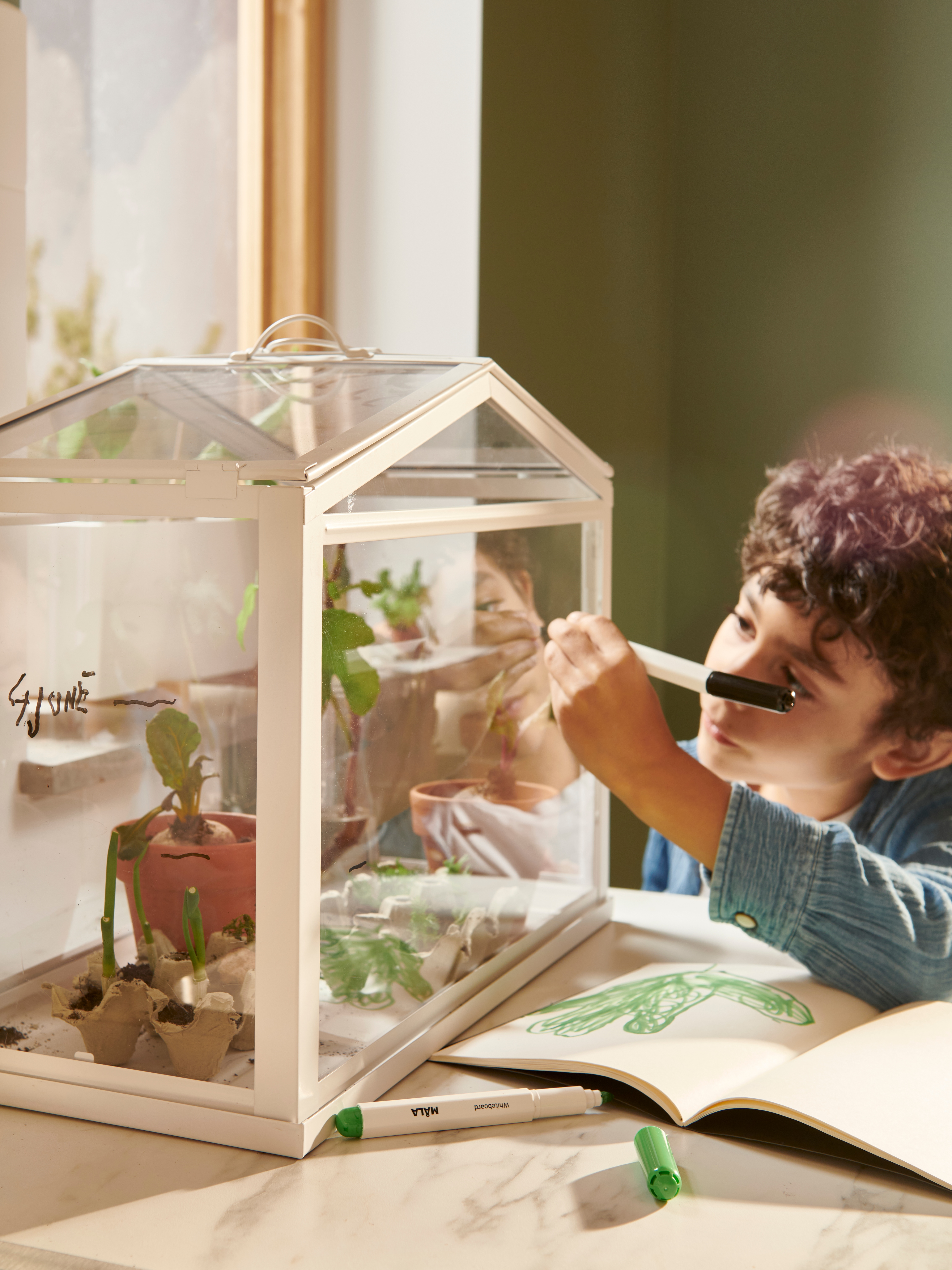 Young boy indoors writing with whiteboard pen on miniature glass greenhouse with potted plants inside.