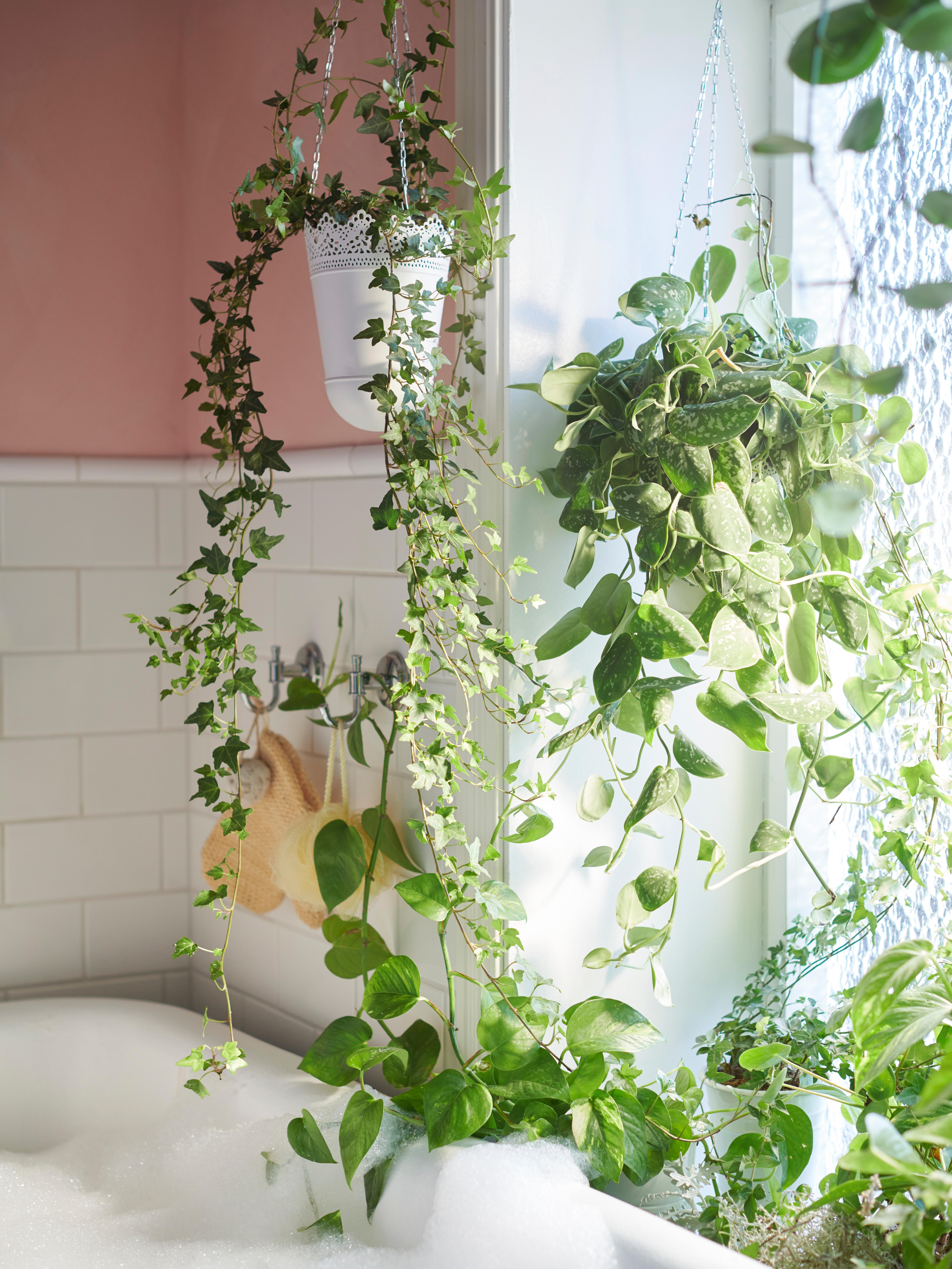 Sivo-bijela, unutarnja/vanjska SKURAR viseća tegla za biljke u kojoj je viseća biljka pored prozora punog lončanica pored kade.