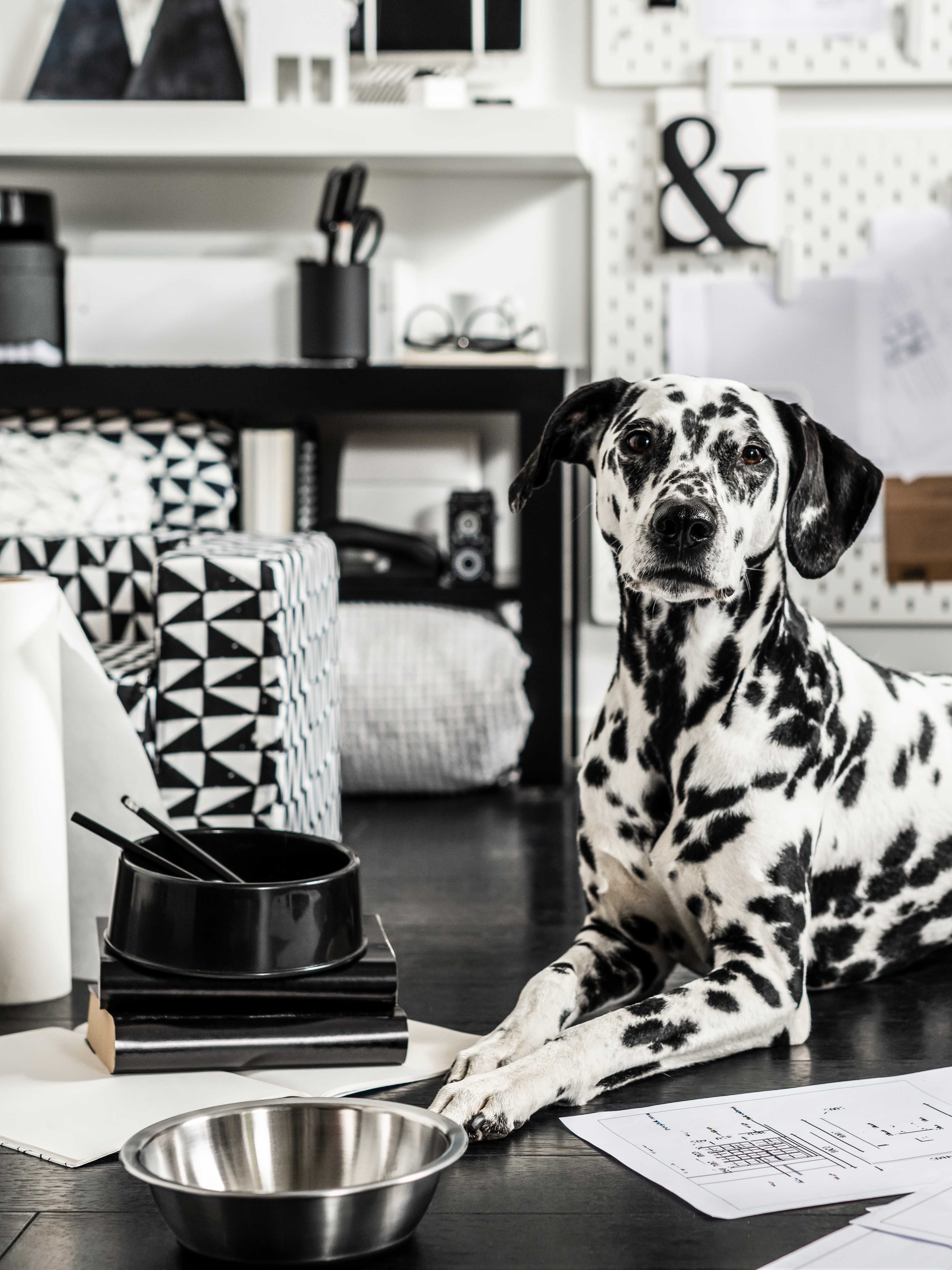 A Dalmatian dog lying next to LURVIG bowls in stainless steel and polypropylene plastic and a cat and dog bed with cover.